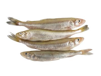 stint s252223wasserfische definition warenkunde